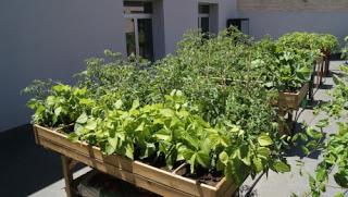 Un huerto en tu terraza. Las verduras de primavera (días 13 y 20 de abril)