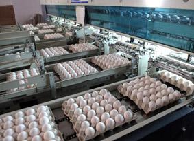 Curso de cocina del huevo (del 13 al 15 de mayo)