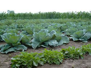 Principio de la agroecología y sus aplicaciones prácticas en agroecosistemas (jueves, 9 de mayo)