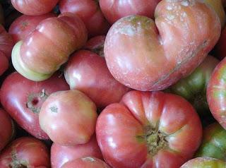 Concurso de tomates en el Urola (miércoles, 18 de septiembre)