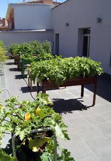 Talleres Un huerto en tu terraza (sábados, 16 y 23 de noviembre)