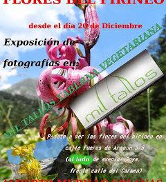 Exposición de fotos de flores pirenaicas (desde el viernes, 20)