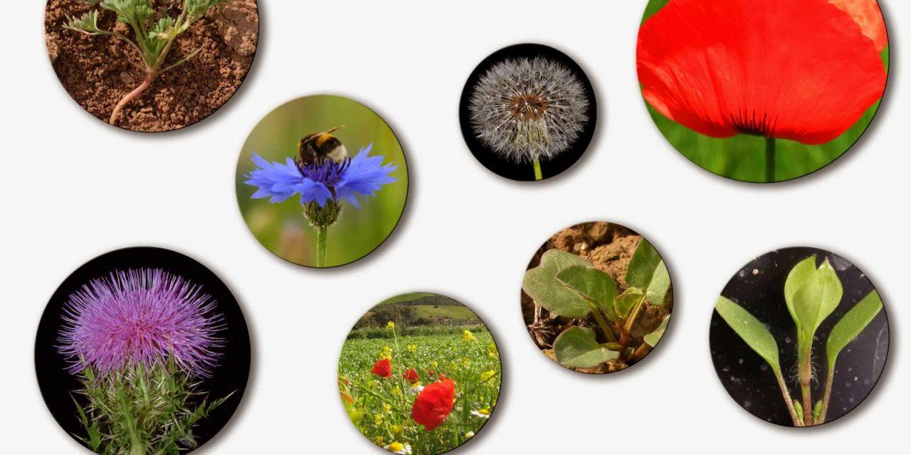 Curso sobre flora arvense (28 de febrero y 1 de marzo)