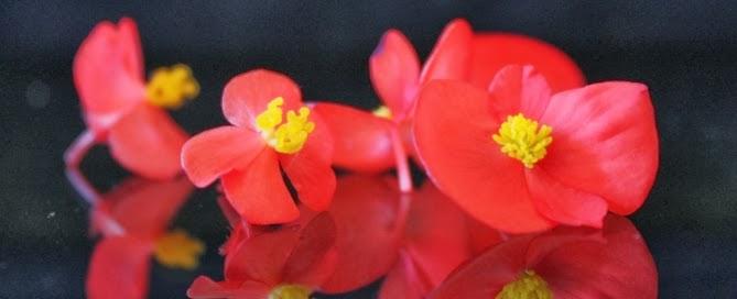 Taller de flores comestibles (sábados 1, 22 y 29 de marzo)