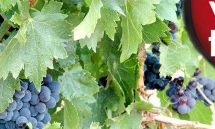 Cata de vinos de la tierra de Aragón (del 25 a 27 de febrero)