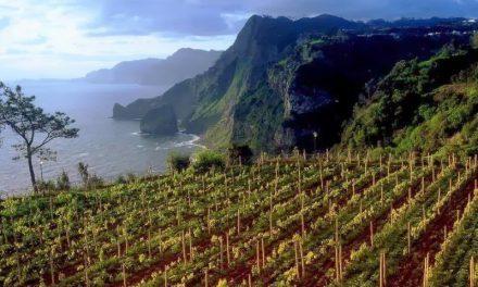 Cata de vinos de Madeira (sábado, 15)