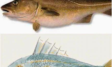 Tapas de bacalao en El Trasgo ( del 1 al 17 de agosto)