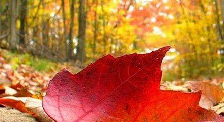Fiesta de otoño y nuevo horario en la terraza del Parque Bruil (viernes, 19)