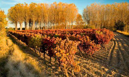 Copa gratuita de vino en La Garnacha (viernes, 19)