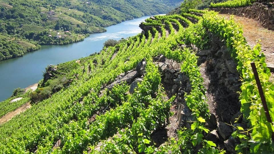 Cata de vinos variedad mencía (viernes, 17)