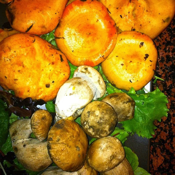 Curso de Cocina de las setas en la Escuela Azafrán (del 7 al 9 de octubre)