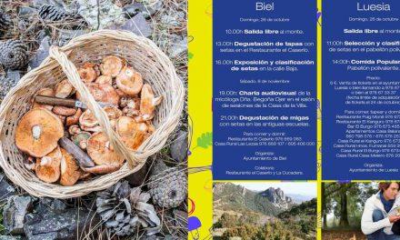 Jornadas micologicas Cinco Villas (del 26 de octubre al 22 de noviembre)