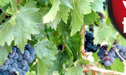 ARAGÓN CON GUSTO. Cata de Vinos de la Tierra de Aragón (viernes, 31)