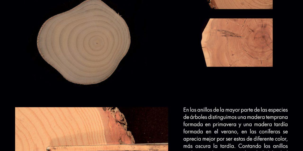 Exposición sobre los anillos de los árboles (hasta el 30 de octubre)