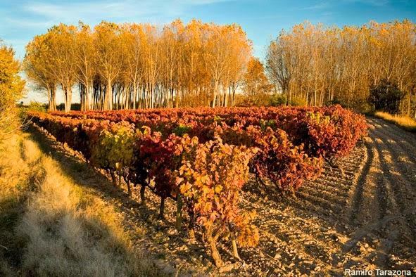 Jornada de vitivinicultura ecológica (miércoles, 3 de diciembre)