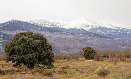 Excursión a la trufa por Urola por 17 euros (domingo, 8 de febrero)