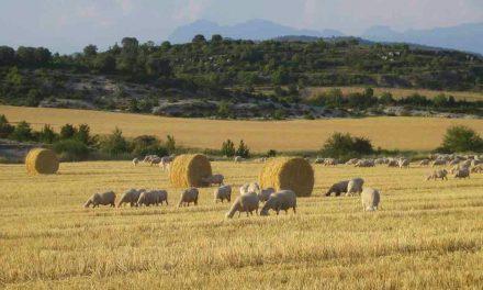 I Jornada de Agricultura y ganadería de montaña (sábado, 24)