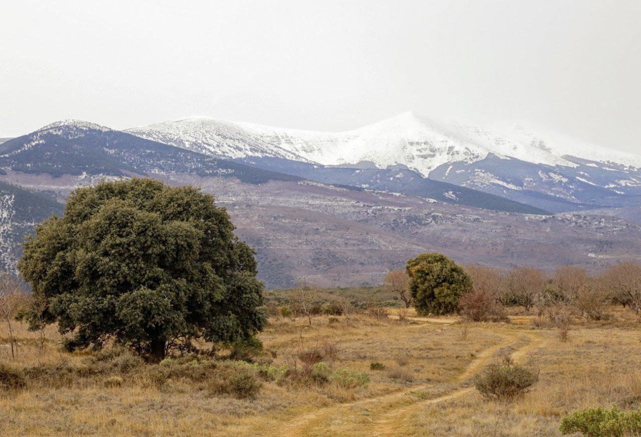 Excursión a la trufa con Urola (domingo, 22 de febrero)