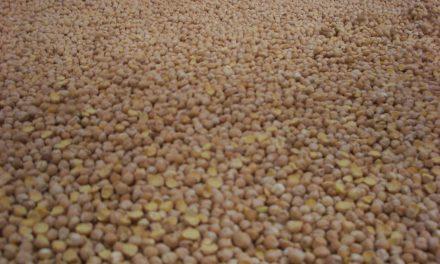 Charla Mercado social, agricultura ecologica y consumo (martes, 24)