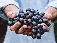 Jornada sobre el vino (martes, 2)