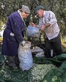 IV concurso fotográfico FotOleo, sobre el olivo y el aceite (hasta el 28 de febrero de 2016)