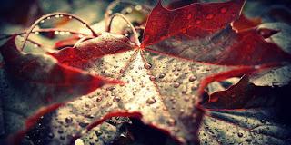 ALFAJARÍN. Cena de otoño (sábado, 21)
