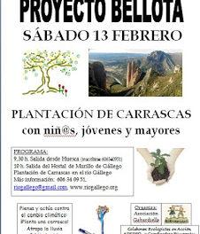 MURILLO DE GÁLLEGO. Plantación de carrascas (sábado, 13)