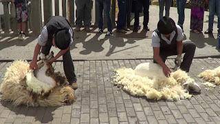 MEDIANA DE ARAGÓN. Feria de artesanía y concurso de esquileo de ovejas (sábado, 23)