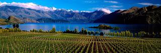 Cata de vinos de Nueva Zelanda (jueves, 28)