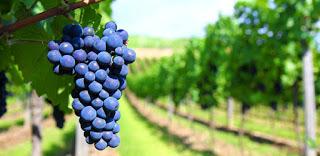 Cata de vinos de Murcia (martes, 6)