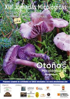 SAN MARTÍN. XIII Jornadas Micológicas de Otoño (del 22 de octubre al 19 de noviembre)