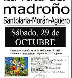 SANTOLARIA. VIII Ruta del madroño (sábado, 29)