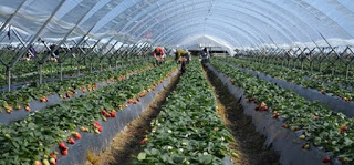 Curso de introducción a la producción hortofrutícola sin residuos (16 y 17)