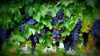 Degustación de vinos aragoneses (viernes, 25)