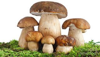 Charlas en el Grupo Micológico Caesaraugusta (21 y 28)