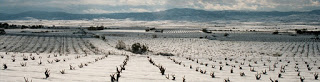 Degustación de vino DOP Cariñena (lunes, 26)
