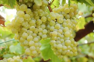 Degustación de blancos aragoneses (jueves, 5)