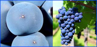 Degustación de vinos Monastrell en VINOS BOTICA (sábado, 25)