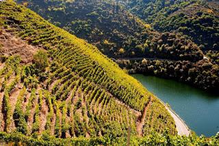 Degustación de vinos de mencía (sábado, 20)
