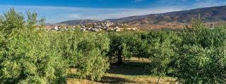 Cata de aceite entre olivos (lunes, 15)