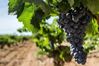 Degustación de vinos de bobal (viernes, 9)