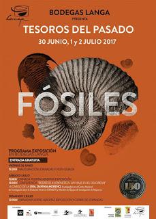 """CALATAYUD. Exposición de fósiles """"Tesoros del pasado"""" (del 30 al 2)"""