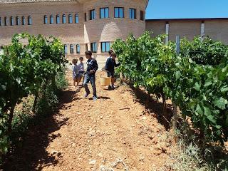 CARIÑENA. IV Jornada Family & Wine en Bodegas Care (domingo, 3)