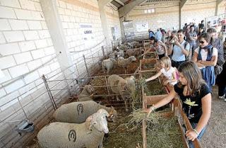 CEDRILLAS. Feria de Ganados y Maquinaria Agrícola (del 29 al 1)