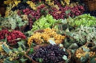 Degustación de vinos multivarietales (sábado, 28)