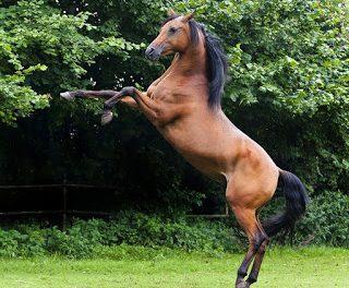 """Curso """"La gestión del picadero de caballos"""" (viernes, 24, y sábado, 25)"""