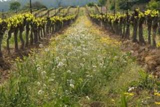 Degustación de vinos ecológicos (viernes, 2)
