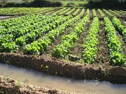 BINÉFAR. Curso de horticultura ecológica (sábados de marzo y abril)