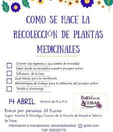 HUESCA. Curso para aprender a recolectar plantas medicinales (sábado, 14)