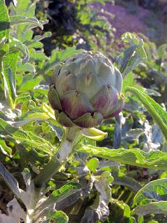 Taller y cena-degustación de verduras de temporada en ABSINTHIUM (miércoles, 25)